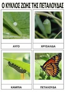 κυκλος ζωης πεταλουδα